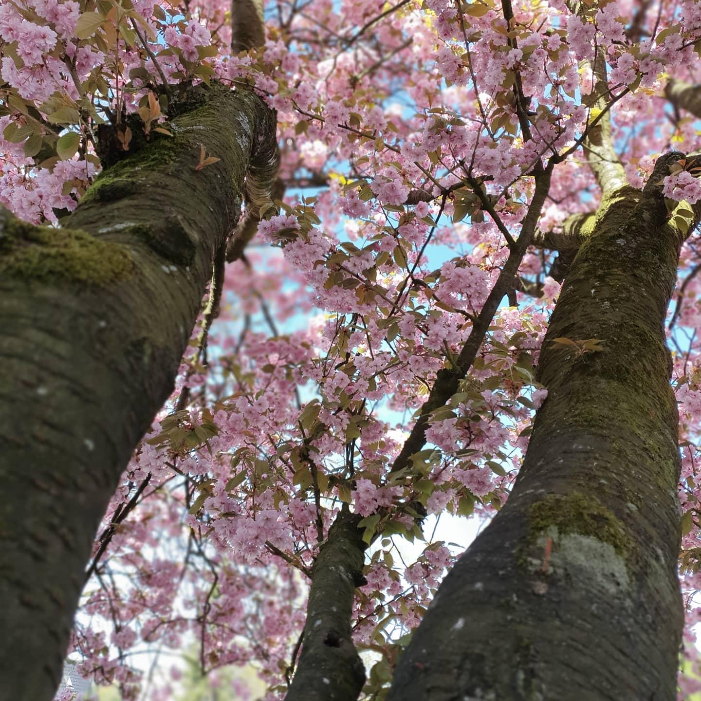 Blütenblätter-3