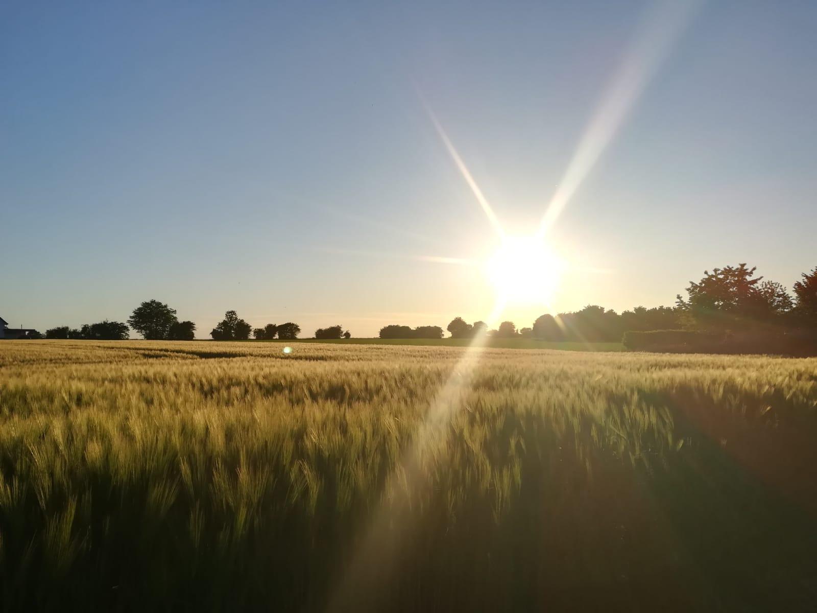 Sonne-überm-Feld