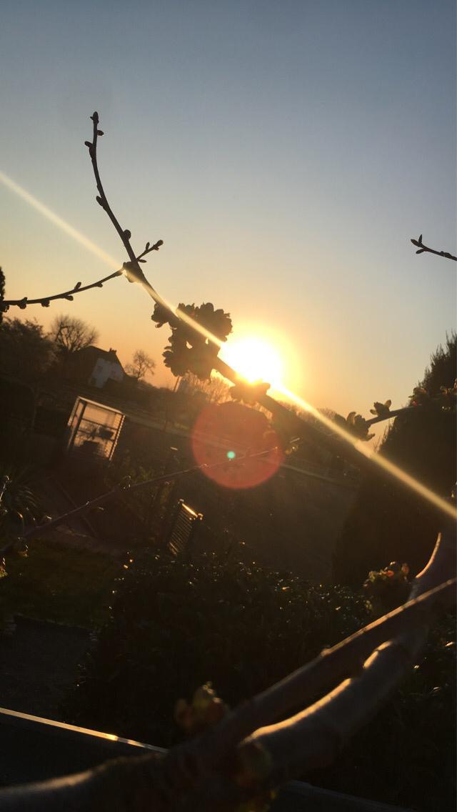 Zweig-im-Sonnenuntergang