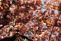 Blütenblätter-2
