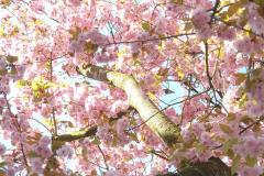 Blütenblätter-4
